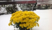 Честит първи сняг! Бъдете внимателни по пътищата!