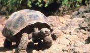 Гигантските костенурки се завърнаха на Галапагоските острови