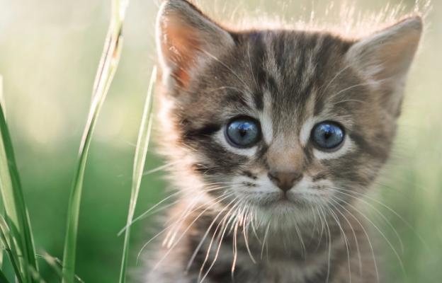 Терапия с котенца