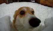 Куче влиза в снежен тунел