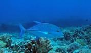 Рифът Тубатаха - едно величествено място!