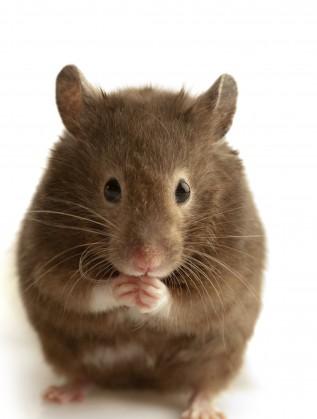 мишки