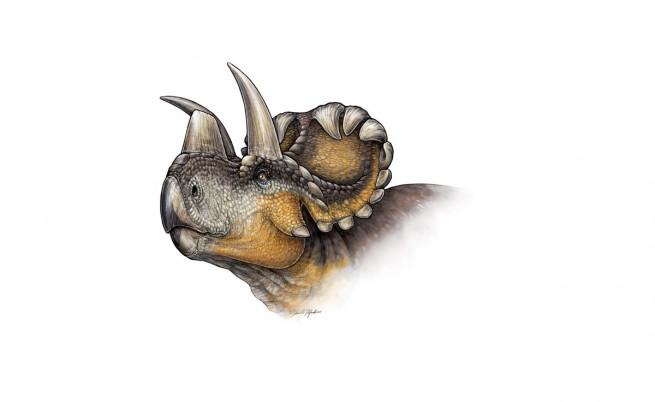 Рисунка на Уендицератопс