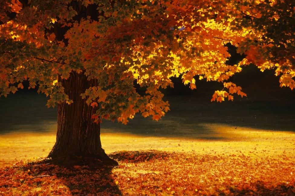 - Есента настъпва съвсем скоро - навръх националния празник 22 септември. Мнозина страдат по отминалото лято, но есетна също има своят чар и ни...
