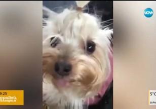 """Куче може да се """"усмихва"""" на стопаните си"""