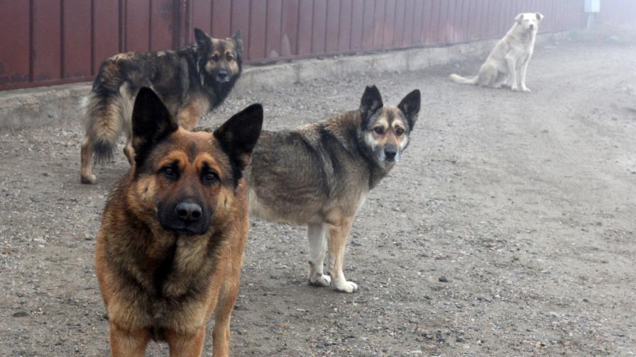 Пак отровени кучета в София