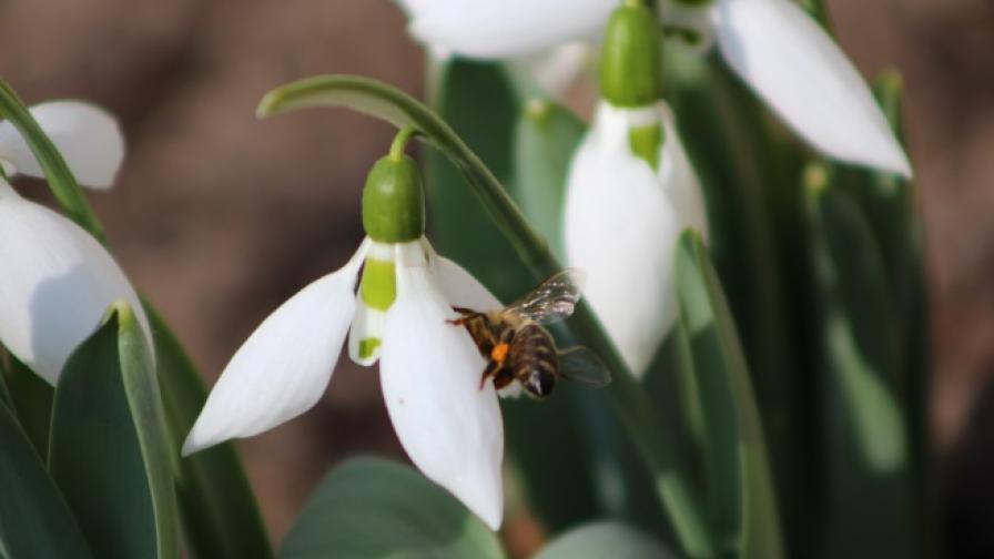 През март зимата отстъпва пред пролетта