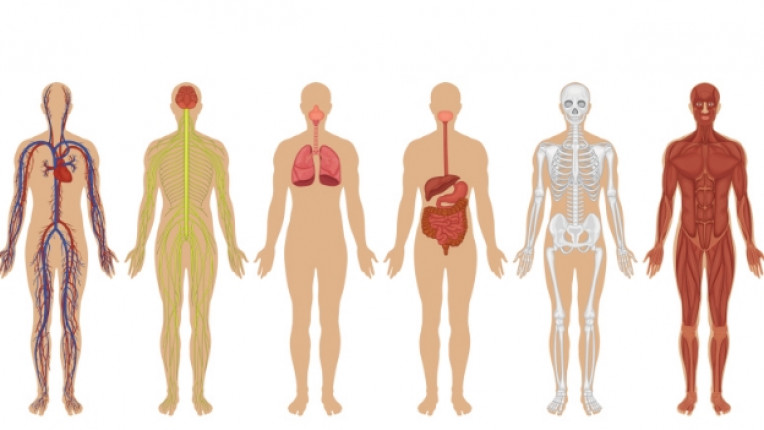 тяло човек