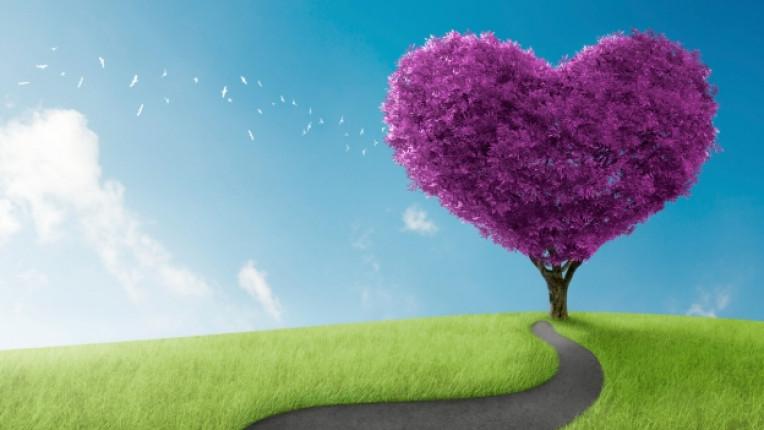 любов природа дърво поляна сърце