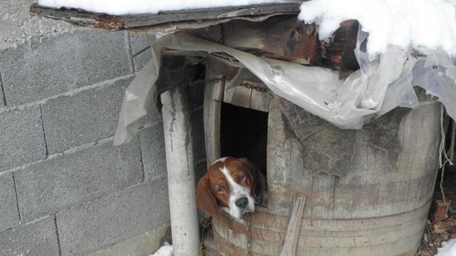 Изверг запали бездомно куче