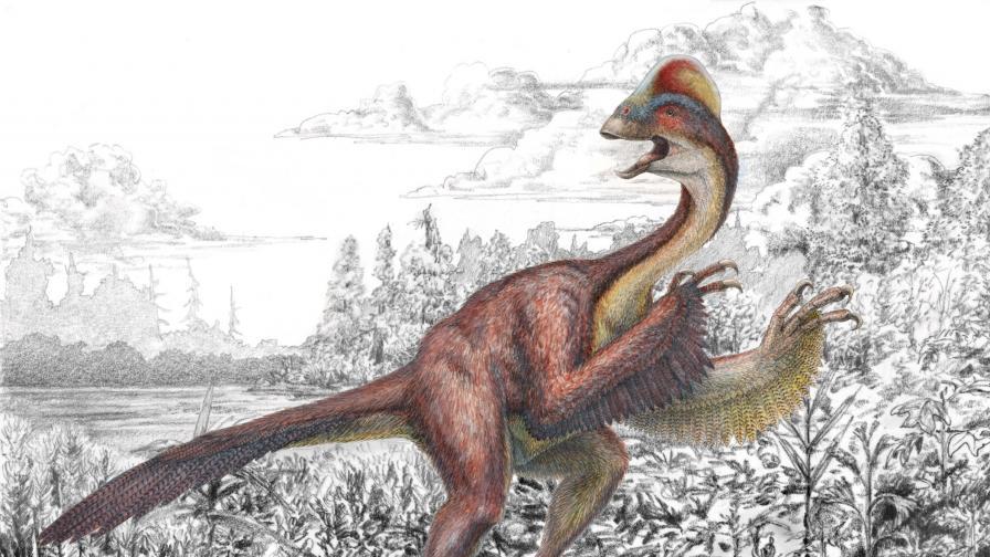 Откриха фосили от динозавър, приличал на гигантска кокошка