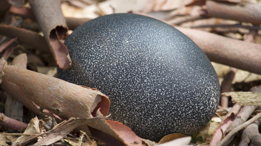 205 000 долара за яйце на слонска птица