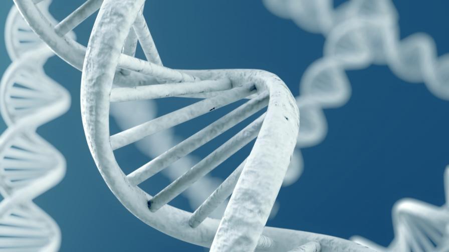 Молекули ДНК оцеляха в Космоса