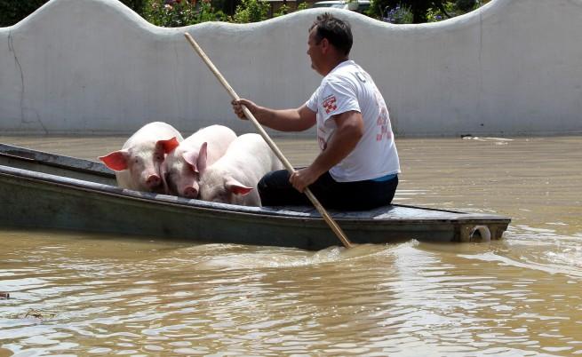 Ново бедствие заплашва Западните Балкани – удавените животни