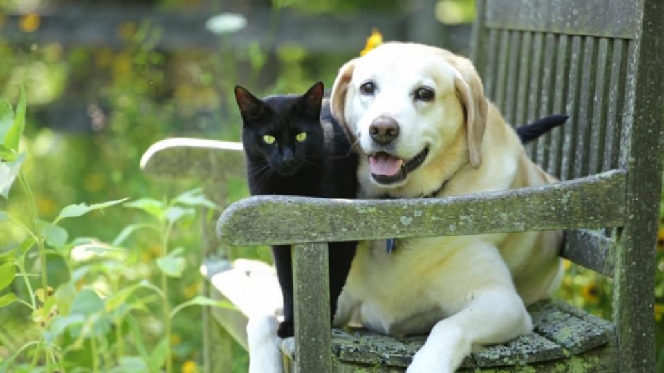 Разликите между собствениците на кучета и котки