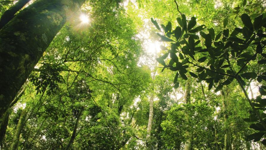 ООН: Половината горски видове в света са застрашени