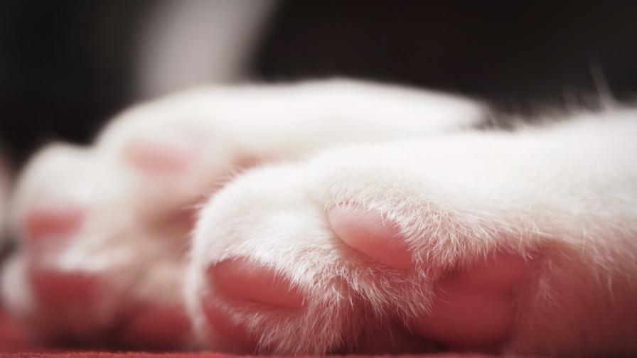 Най-старата котка в света се спомина