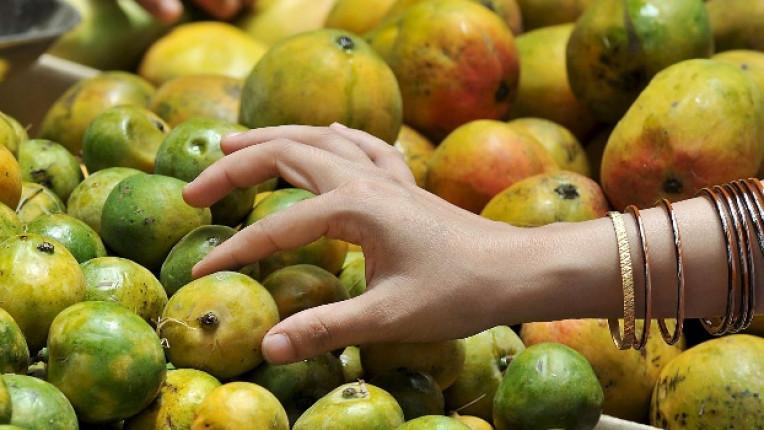Родината на мангото е Черният континет
