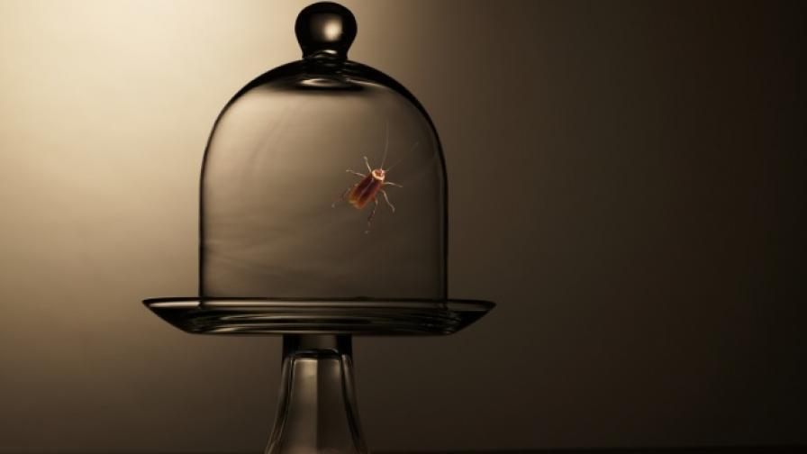 100 хил. хлебарки за... домашни любимци