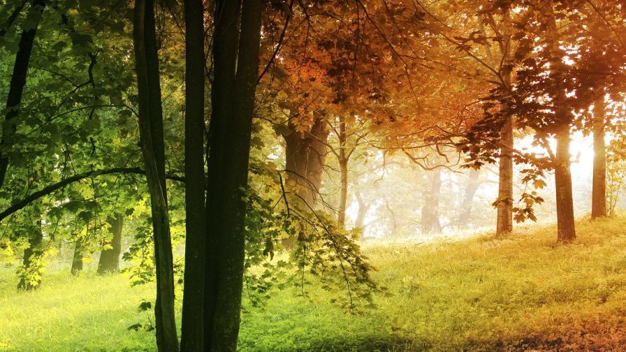 Учени: Температурните разлики между сезоните ще намаляват