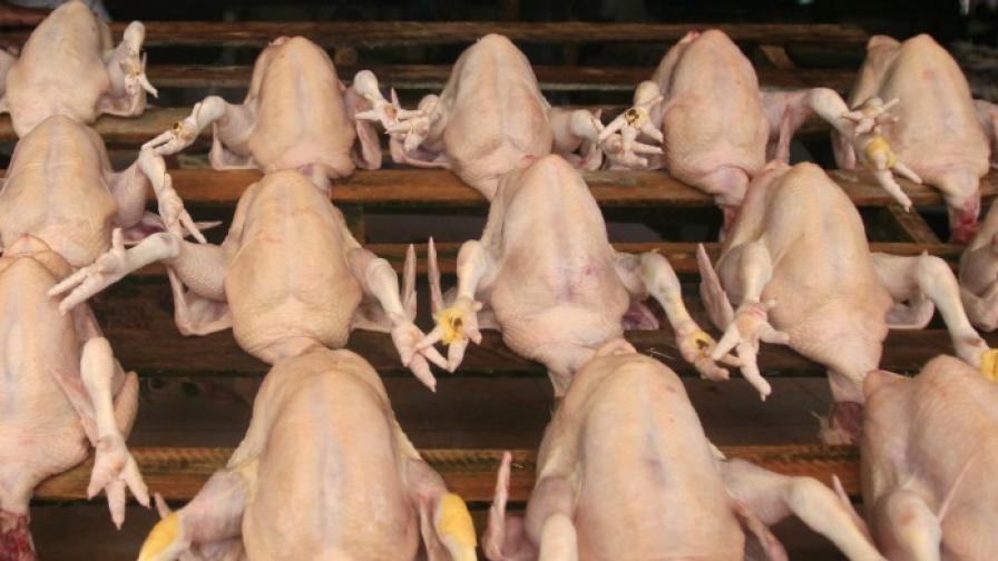 Пилешко със салмонела e открито в магазини в Пловдив