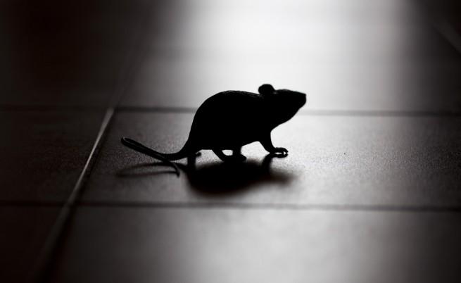 Учени: Агресията води до поява на нови нервни клетки в мозъка
