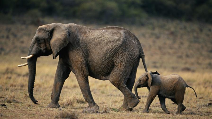 Идва ли краят на слонове, полярни мечки и носорози?