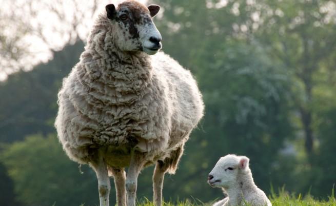 Русия спира вноса на животни от България заради болестта
