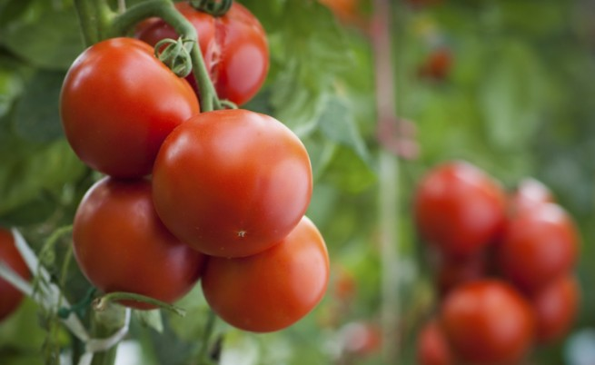 Колко са щетите за земеделието ни от руското ембарго