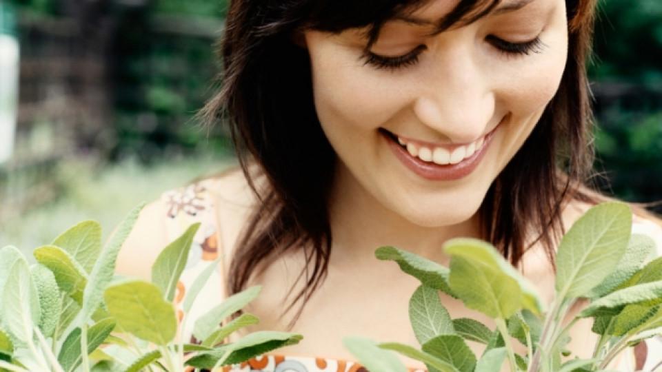 Салвия – натурална грижа за здравето