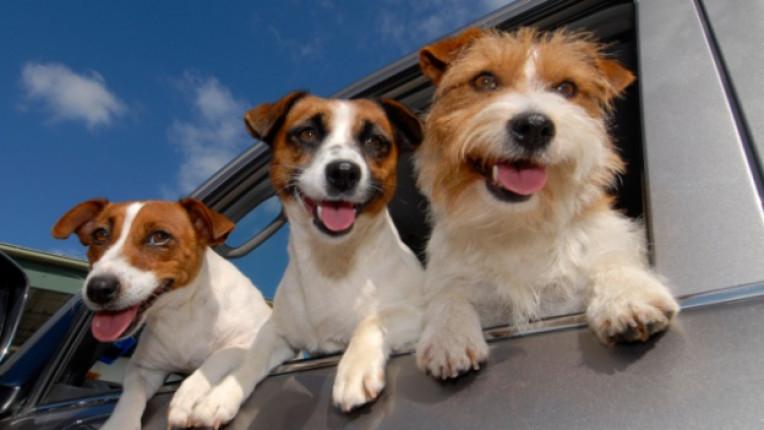 куче безопасен път ваканция отпуска море