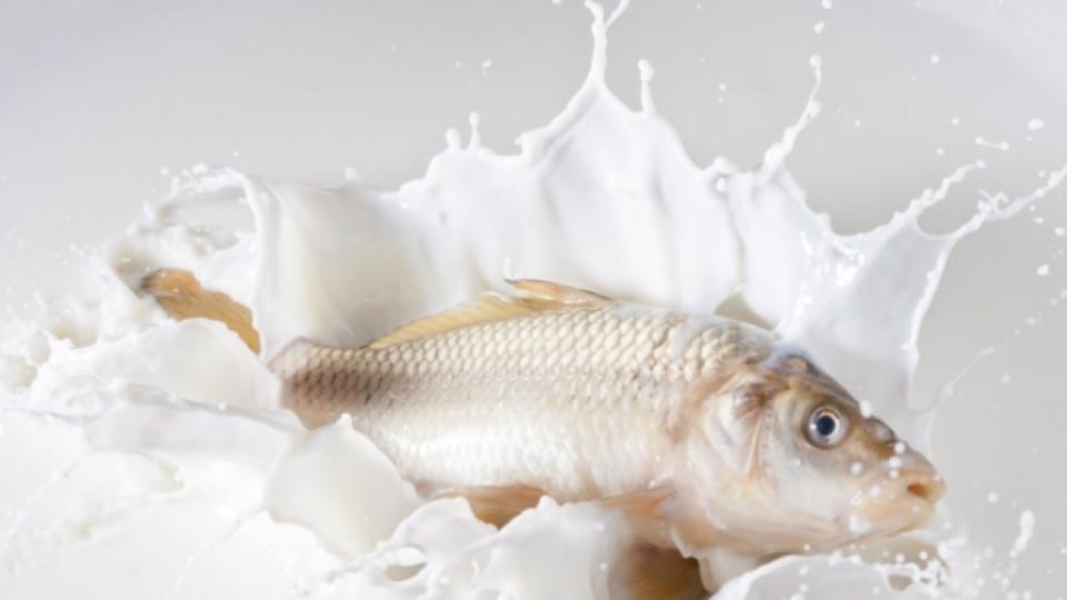Може ли да ни отрови комбинацията риба и мляко?
