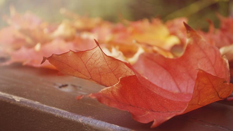 От -7 до 20 градуса ще са температурите през ноември