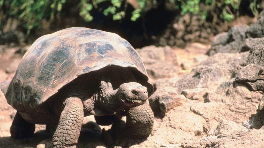 Костенурките се завърнаха на островите Галапагос