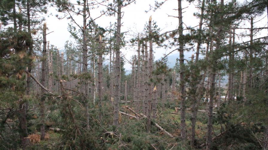 1200 декара гора край град Шипка е унищожена от снежната виелица