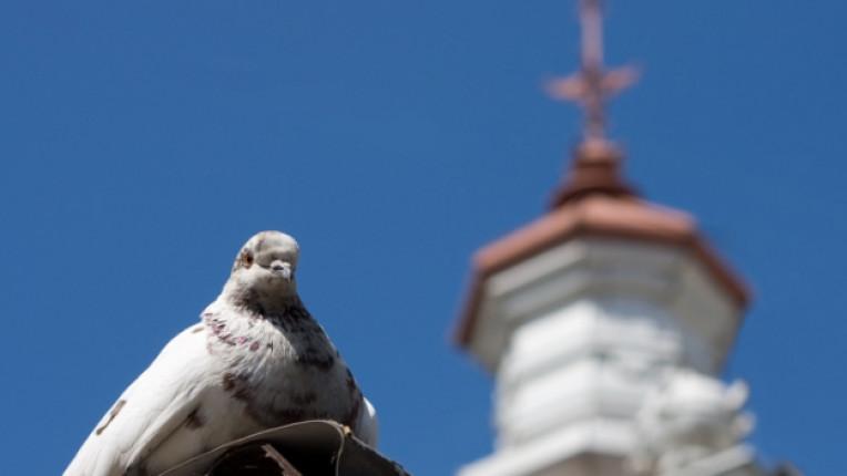 кръст църква птица християнство