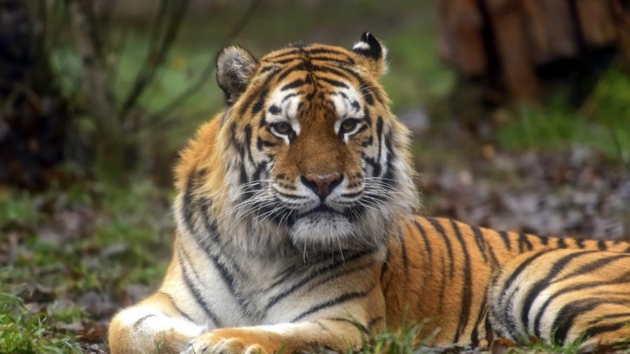 Втори тигър на Путин емигрира в Китай
