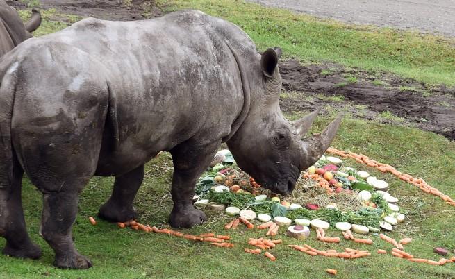 Умря последният мъжки северен бял носорог