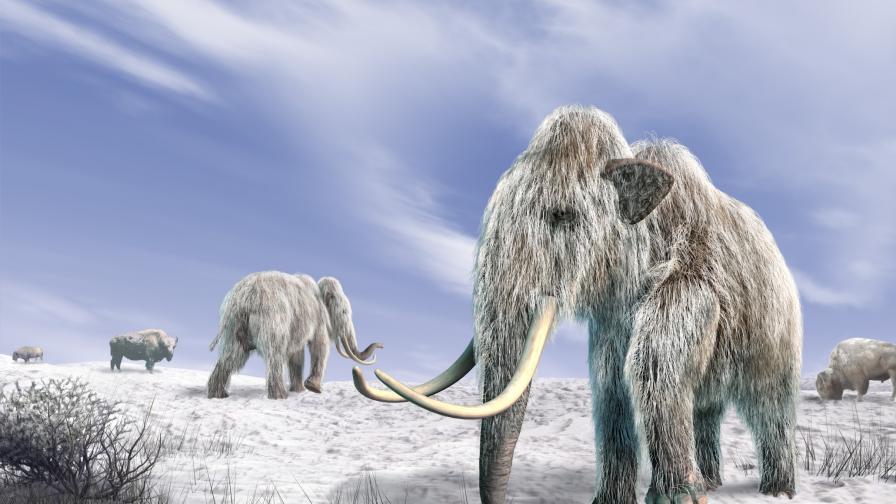 Хората, а не астероид, избили мамутите