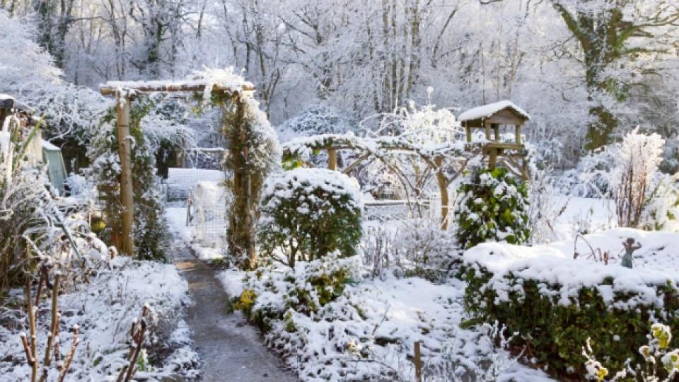 Как да се грижим за растенията през зимата – I част