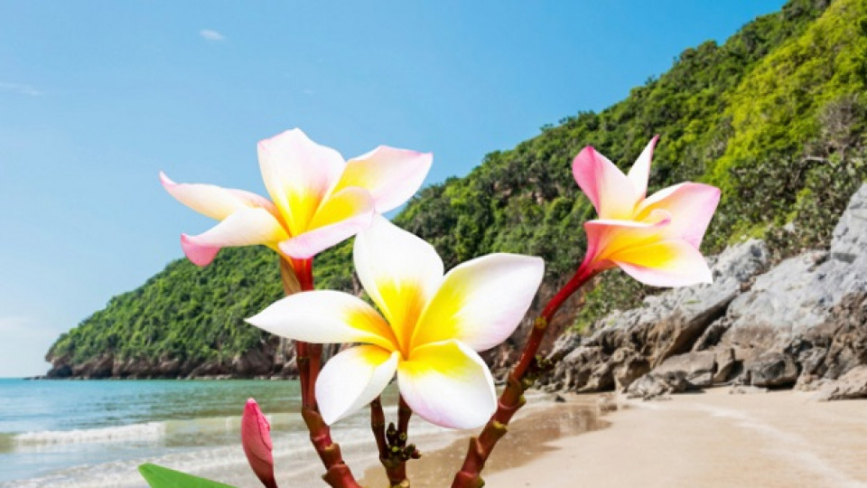 Стряскащата тайна на остров Бали