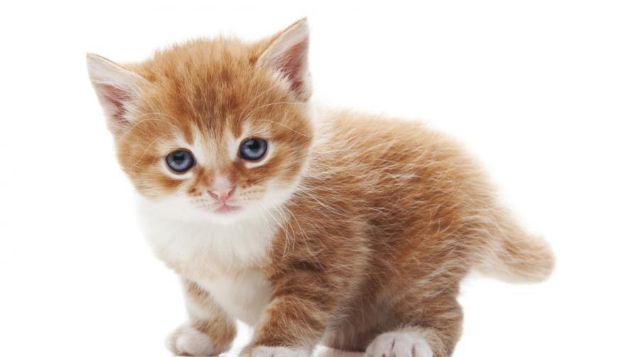 Варвари боядисаха котенца, кръстиха ги Шрек и Смърф