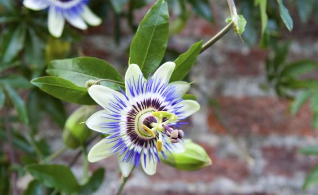 Най-редките растения в света