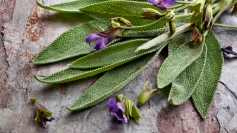 Как да си отгледате билки у дома