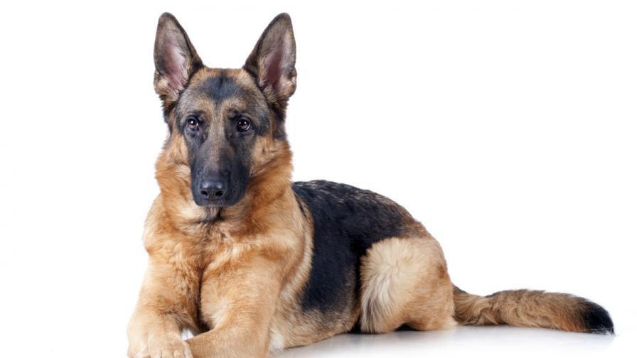 <p>Жена загуби ръцете и краката си след &bdquo;целувка&rdquo; на куче</p>