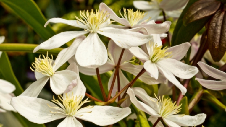 бах цвете