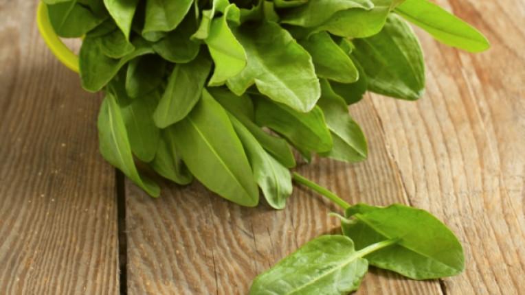 лапад зеленчук зелен