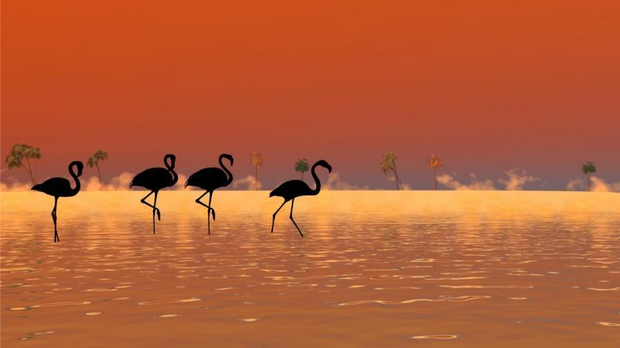 Черно фламинго беше забелязано в Кипър (видео)