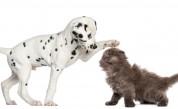 5 знака, че домашният любимец има нужда от ветеринар