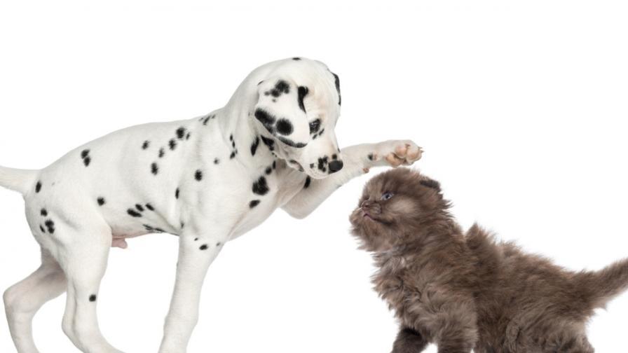 <p>5 знака, че домашният любимец има нужда от ветеринар</p>